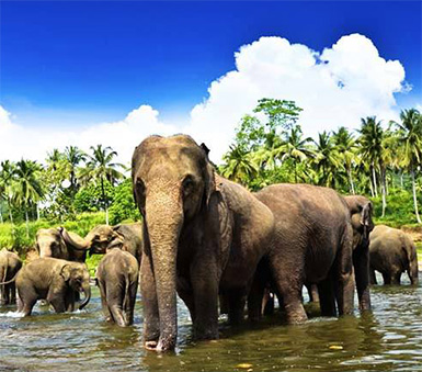Best Tours in Sri Lanka