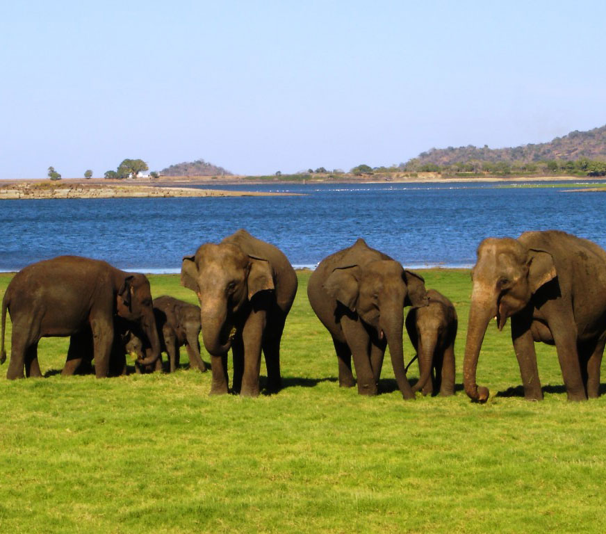 Wildlife Tour in Sri Lanka