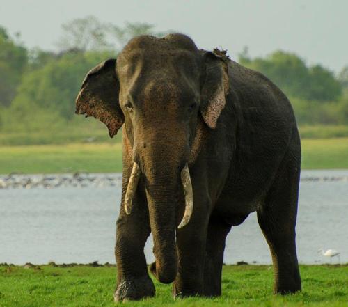 Wildlife And Sri Lanka Beach Tour