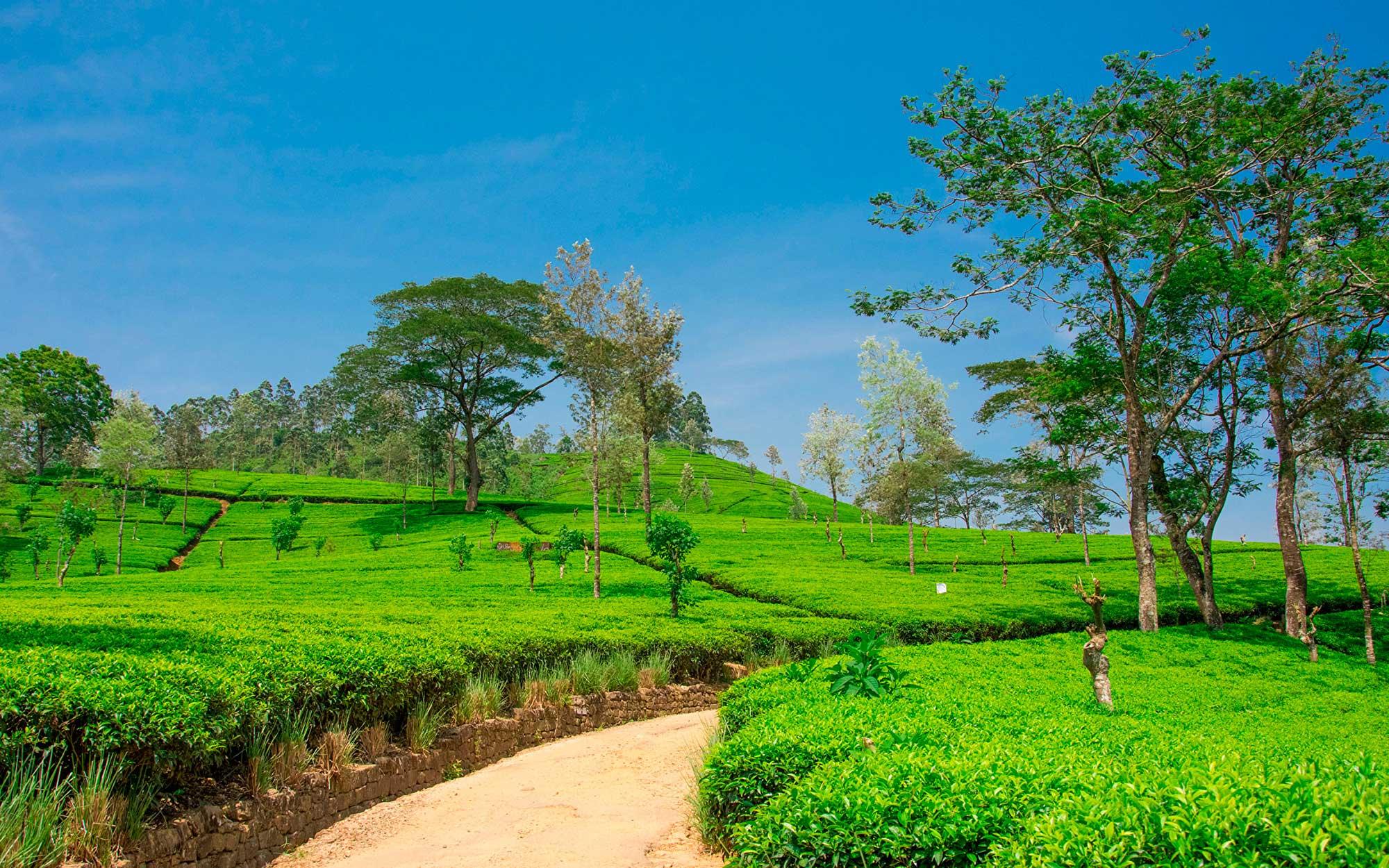 Halal Tours in Sri Lanka